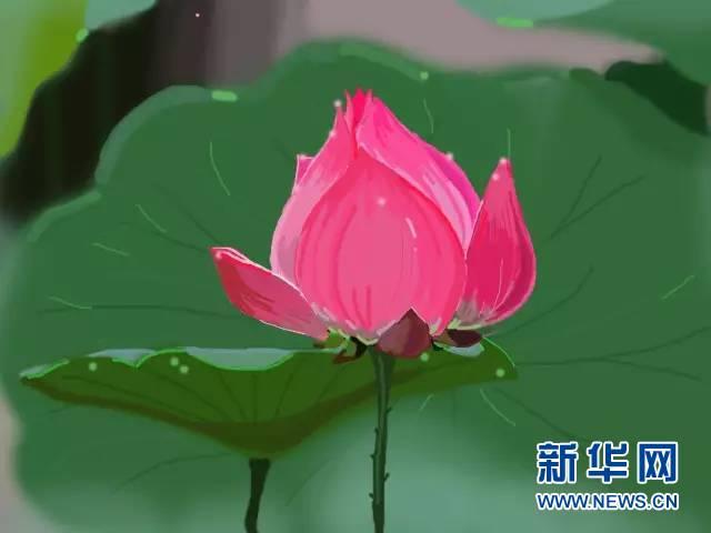 系列广播剧《白洋淀故事》:千亩荷花别样红