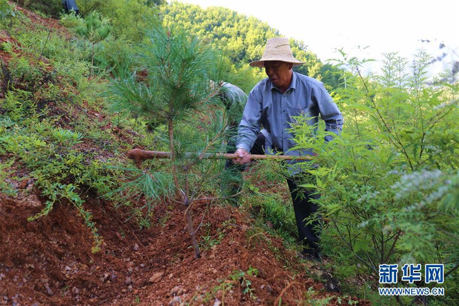 #(环境)(3)河北承德:实施雨季造林攻坚 建设京津生态屏障