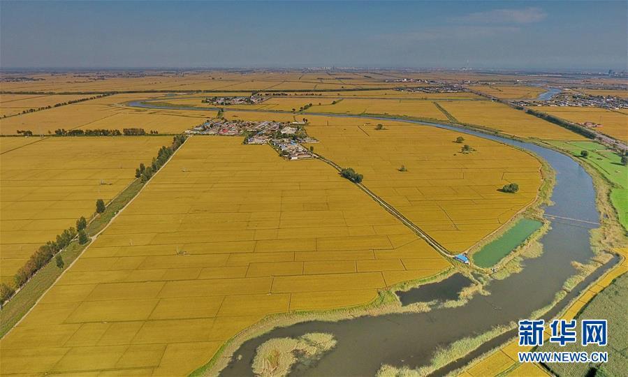 (經濟)(1)河北秋糧豐收在望