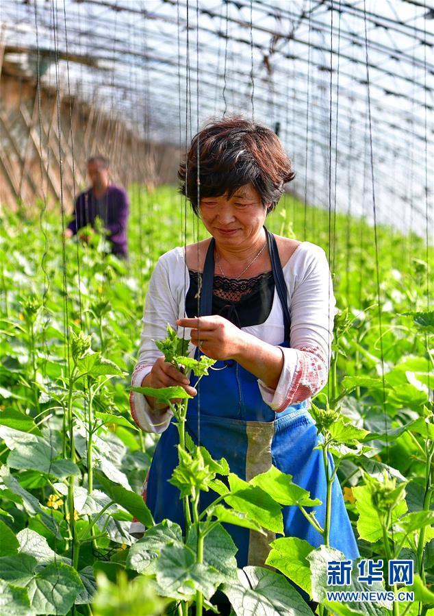 (经济)(2)蔬菜种植规模化发展助增收