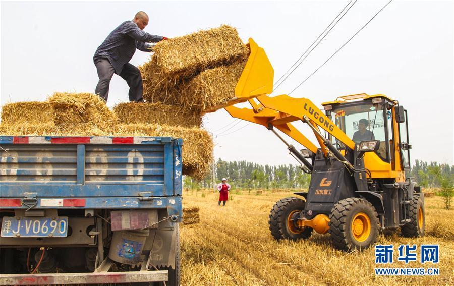 (經濟)(1)河北永清:小麥豐收 秸稈變寶