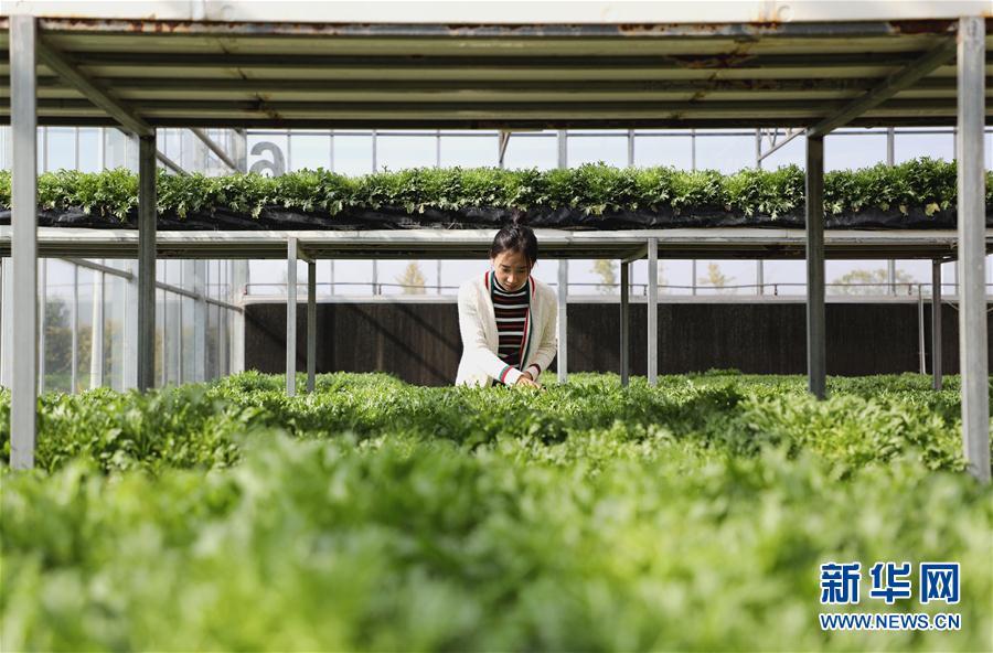 (經濟)(1)河北香河:農旅融合發展助力鄉村振興