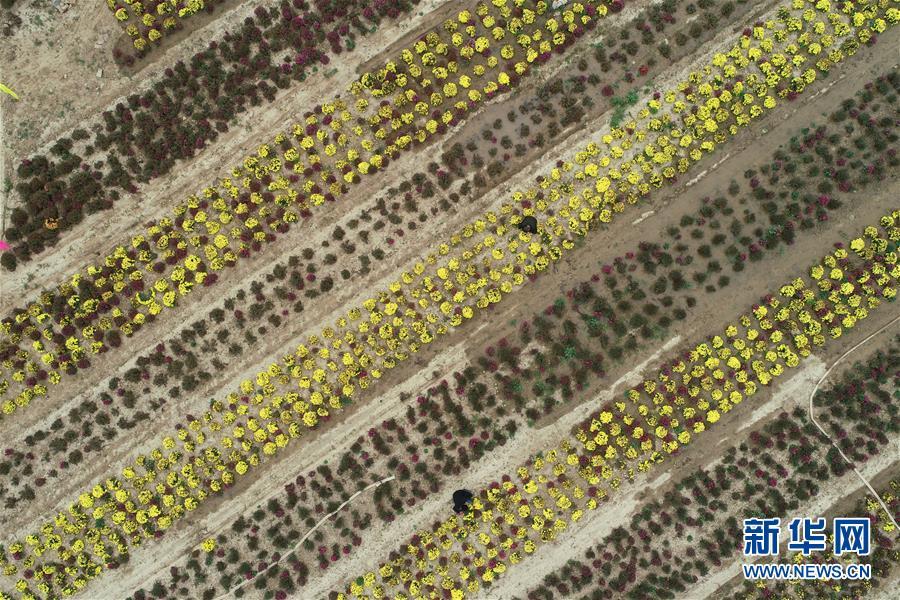 (社会)(4)河北威县:特色种植富农家