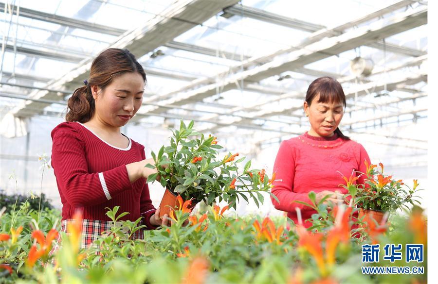 #(社会)(1)河北南和:特色种植富农家