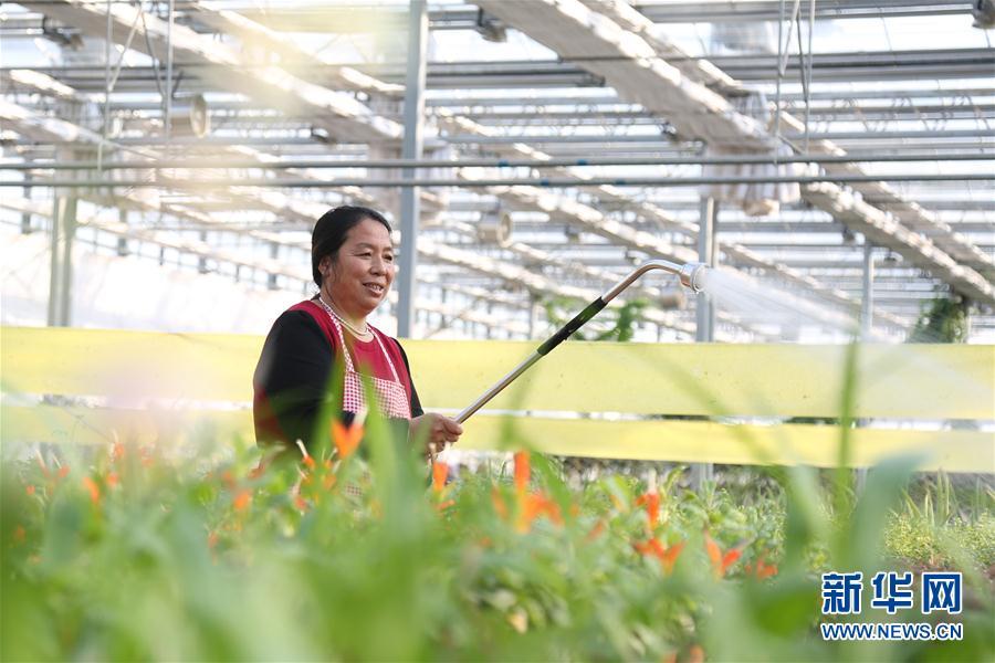 #(社会)(2)河北南和:特色种植富农家