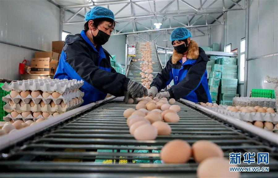 (經濟)(1)河北:穩定畜禽生産 保障産品供應
