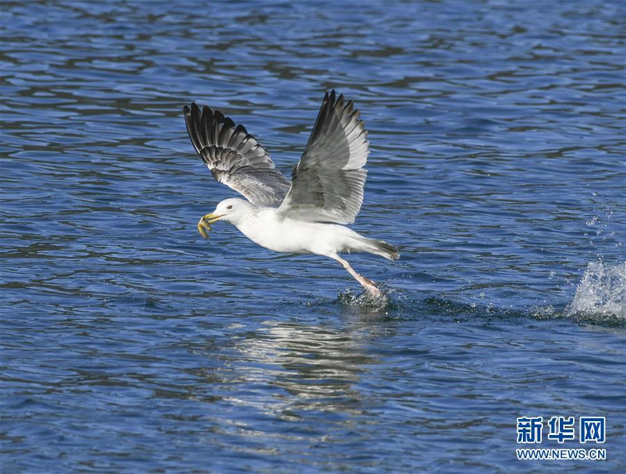 #(環境)(1)藍天水鳥舞當空