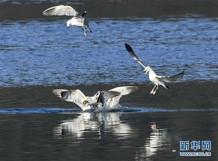 #(環境)(4)藍天水鳥舞當空