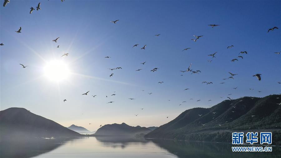#(環境)(5)藍天水鳥舞當空