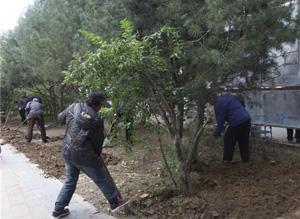涿州市積極安排部署園林綠化各項創城工作