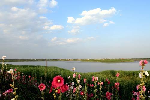 美麗的衡水湖