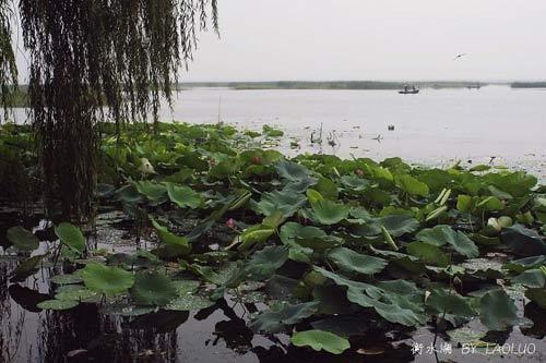 蕩舟衡水湖