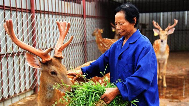 """河北衡水:扶貧有""""鹿""""富農家"""