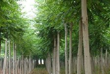 探索造林新模式