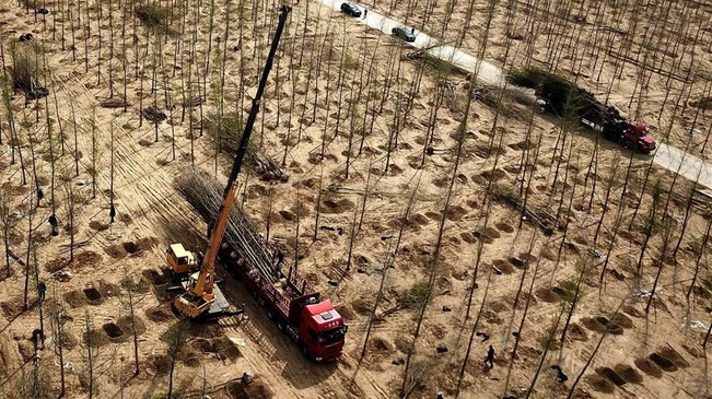 河北廊坊:造林百万亩建立京津冀生态屏障