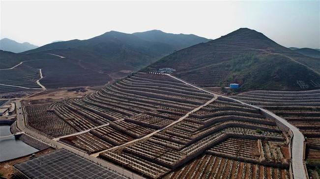 河北滦县:荒山改梯 蔬果飘香