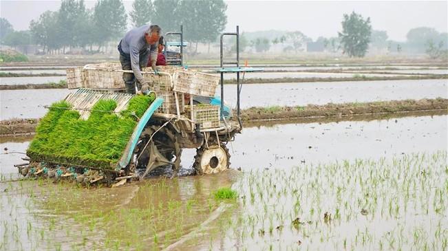 河北唐山:抢抓农时忙插秧