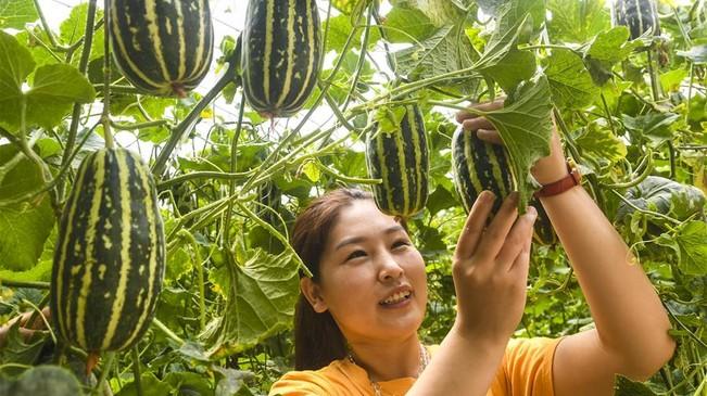 河北大城:特色农业休闲旅游助推乡村振兴