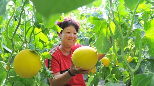河北吴桥:特色农业助力精准扶贫