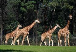 端午假期约4.5万人逛石市动物园、植物园
