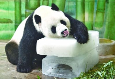 """酷夏动物园的动物们避暑有""""凉方"""""""