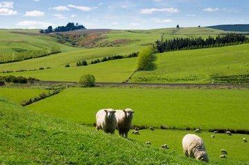 河北出台意见:提高单位面积土地投入和产出水平