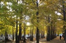 廊坊营造百万亩森林染绿京津走廊