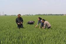 沧州国家农业科技园区通过国家级初验