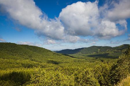 塞罕坝林场达成首笔碳汇交易 项目计入期30年