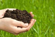 预计下半年河北主要农业有害生物中等发生