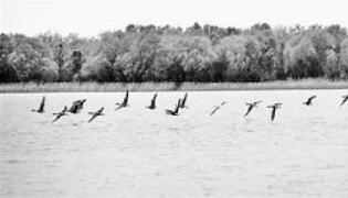 為了一湖碧水 衡水實施8項重點工程