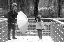河北今冬首场雪扬扬洒洒下了小半天