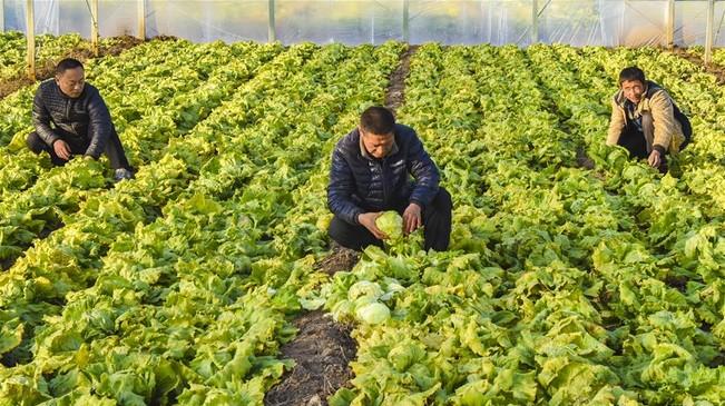河北文安:特色生态农业助推乡村振兴
