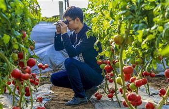 河北饶阳:打造蔬菜品种测试基地引领蔬菜产业升级