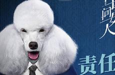 《格子间女人》定档12月28日 唐嫣开启职场战