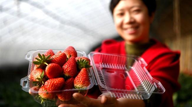 河北廊坊:農旅融合促發展