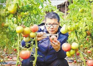 """【新春走基層】讓優質蔬菜""""贏在起跑線上"""""""