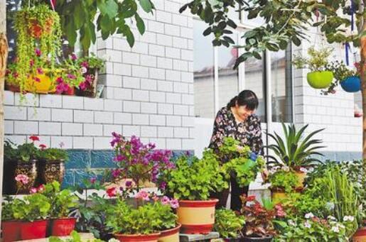 """滄州今年將創建20萬戶""""美麗庭院"""""""