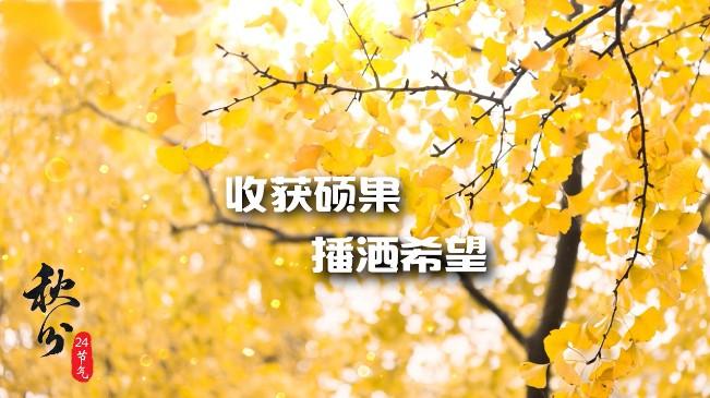 秋分|收獲碩果 播灑希望