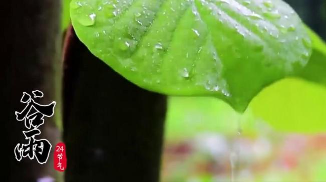 [短視頻]谷雨|春夏交時 雨生百谷