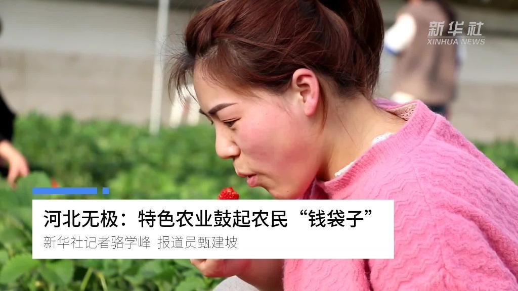 """河北無極:特色農業鼓起農民""""錢袋子"""""""