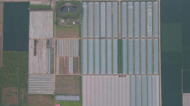 河北成安:谷雨過後農活忙
