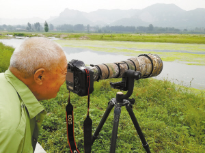 冶河湿地水鸟聚集 国家一级保护动物也来啦