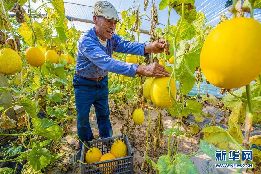(经济)(3)河北武邑:就业扶贫带动脱贫