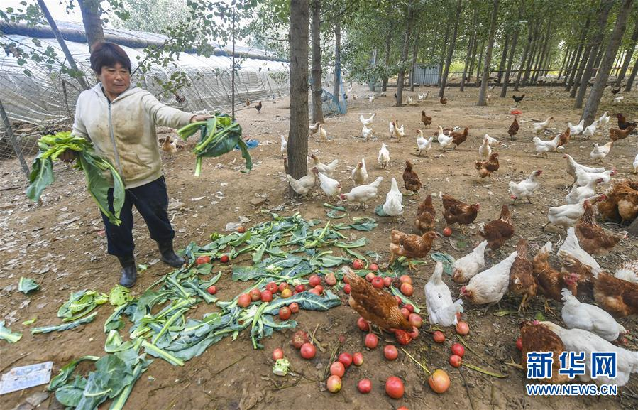 (社会)(1)河北广阳:循环农业打造绿色发展新模式