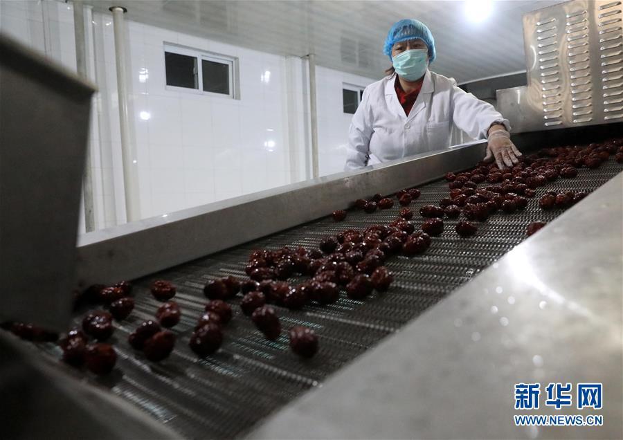 #(經濟)(1)河北讚皇:大棗産業助民增收