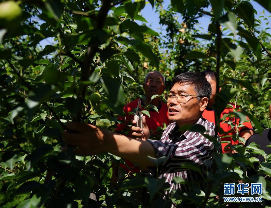 (經濟)(1)河北邢臺:農技服務走進鄉村果園