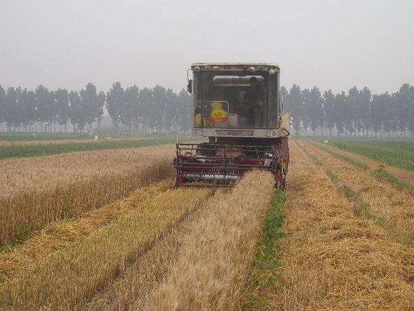 夏至已过,麦田进入成熟季节,走在迁安市扣庄乡的田间地头,只见麦浪